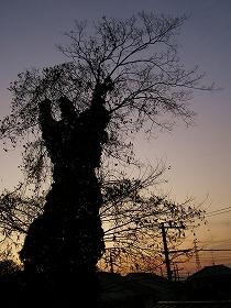 061219silhouette_tree_1