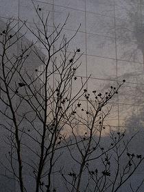 061223w_silhouette