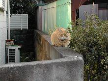 041116nekohakozuwari.jpg
