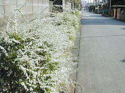 050326yukiyanagi