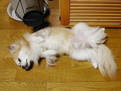 050625cook_hiraki