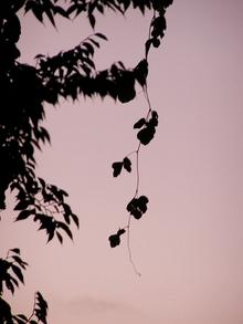 081029kuzu_silhouette