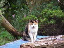 081015old_cat