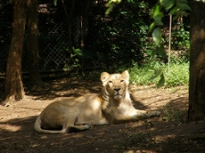 091012zoo10indoraion3