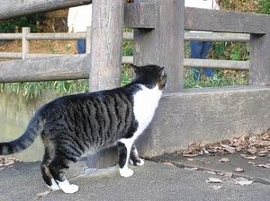 091212_3cat1