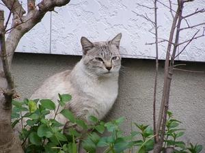 100101sanpo_cat