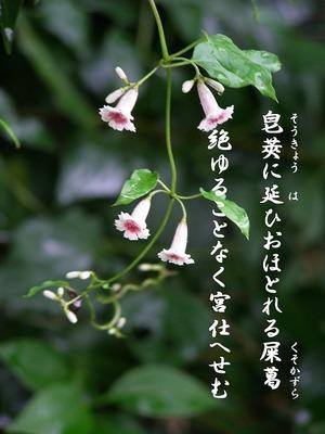 110821hekusokazura5_manyousyuu