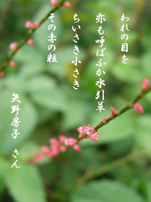 110824mizuhiki6_tanka
