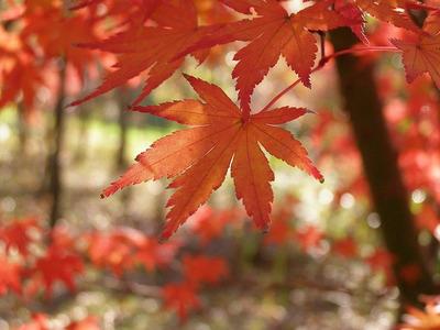 111204chigasakisatoyama13