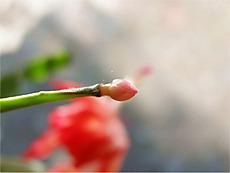 111219denmark_cactus8