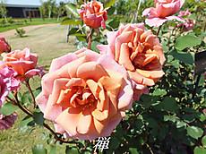 120519kana_garden12_name