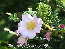 120519kana_garden15_name