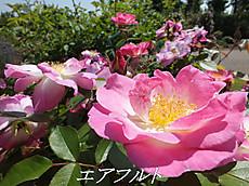 120519kana_garden18_name