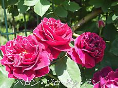 120519kana_garden37_name
