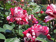 120519kana_garden68_name