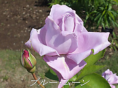 120519kana_garden6_name