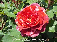 120519kana_garden75_name