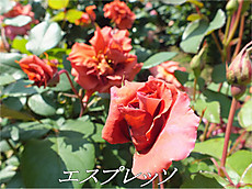 120519kana_garden90_name