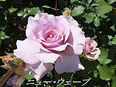 120519kana_garden94_name