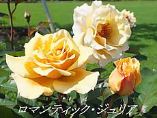 120519kana_garden9_name