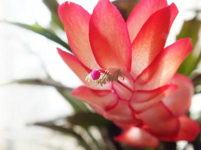130107denmark_cactus2