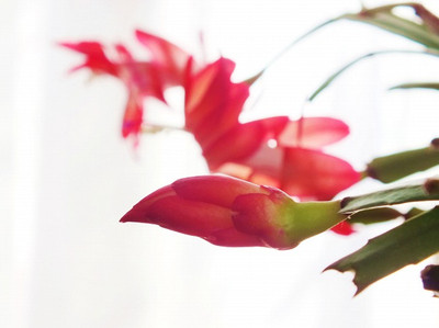 130107denmark_cactus6