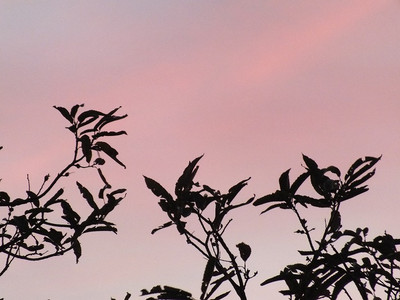 131128sky_pink5