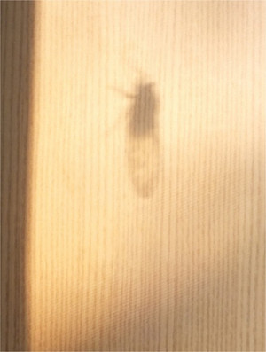 150814semi_silhouette