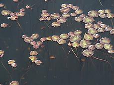 170502karuizawa_lake_garden25asaza