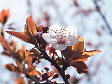 170502karuizawa_lake_garden5benib_2