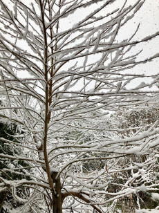 180122first_snow