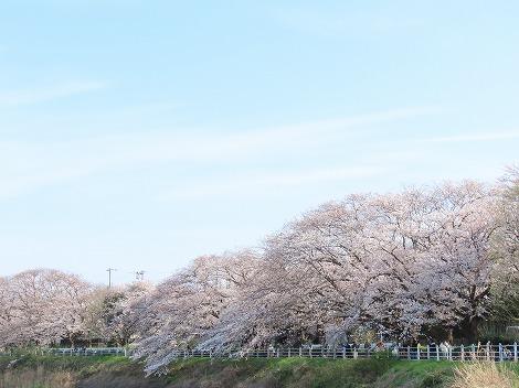 210327sakaigawa_syounandai2