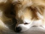 061121cook_sleeping