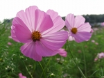 071020cosmos_up1