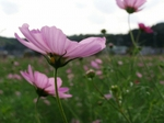 071020cosmos_up2