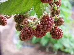 090627blackberry