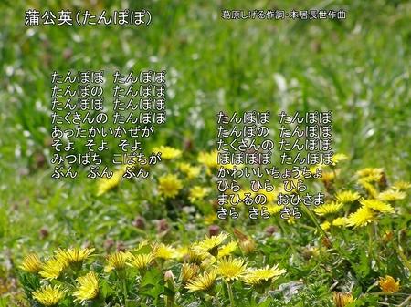 100410tigasakisatoyama_tanpopo7ut_2