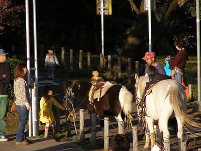 111204chigasakisatoyama39horse1