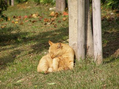 101107sinsuikouen_cat4