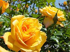 120519kana_garden101_name