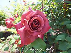 120519kana_garden103_name