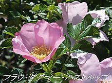 120519kana_garden21_name