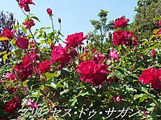 120519kana_garden31_name