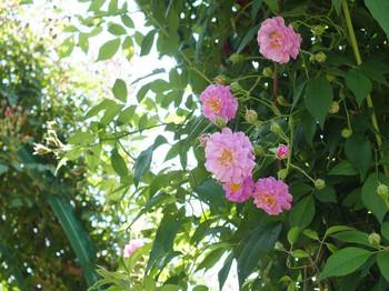 120519kana_garden42