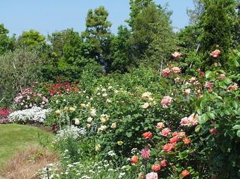 120519kana_garden54