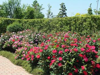 120519kana_garden58