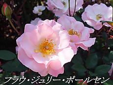 120519kana_garden71_name