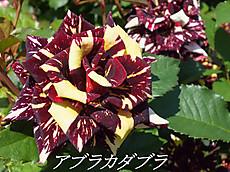120519kana_garden73_name