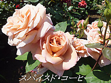 120519kana_garden88_name