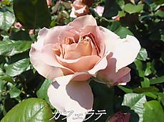 120519kana_garden92_name